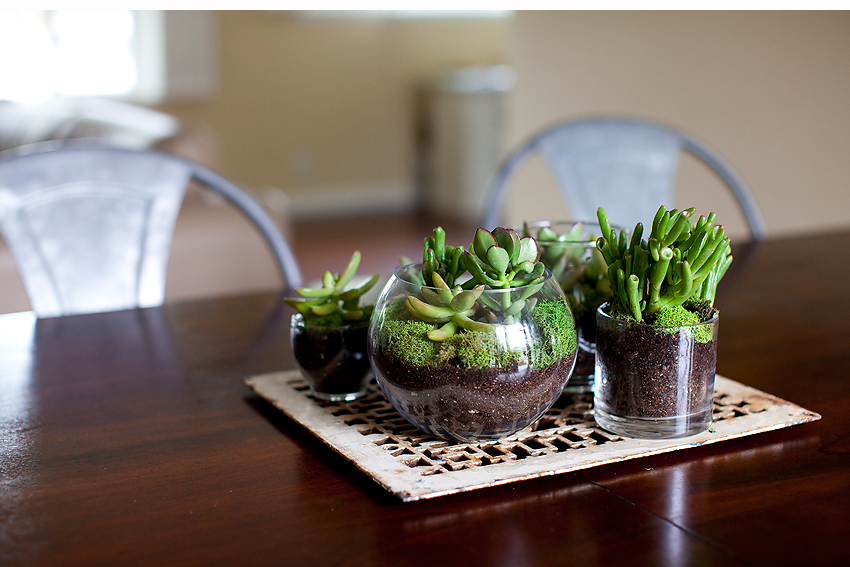 Diy Terrarium Orange County Photographer